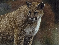 Oregon mountain lion hunting