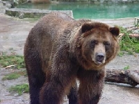 Grizzly bear Hunting Guides and Outfitters from British Columbia, Canada