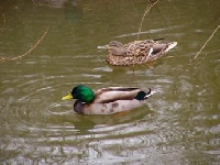 Duck Hunting Guides and Outfitters from Yukon, Canada